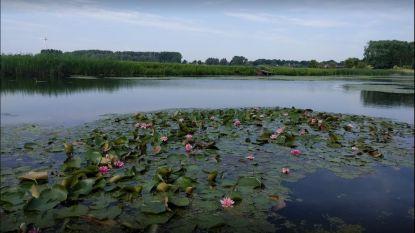 Stadsrandbos krijgt verder vorm, eind november aanplant 8 extra hectare