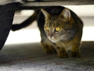 Doorrijden nadat je een kat geraakt hebt? Hier krijg je een boete van bijna 12.000 euro