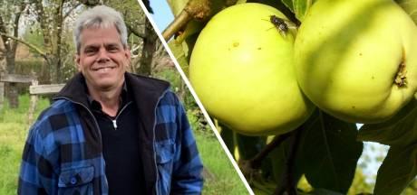 Beste Achterhoekers, 400 Achterhoekse appelsoorten? Jazeker!