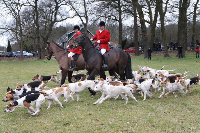 Slipjacht: de meute honden jaagt op een met vossenurine getrokken spoor over de landerijen tijdens een eerdere jacht bij Hardenberg.