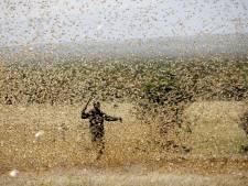 Wereldbank komt met half miljard voor hulp na sprinkhanenplaag