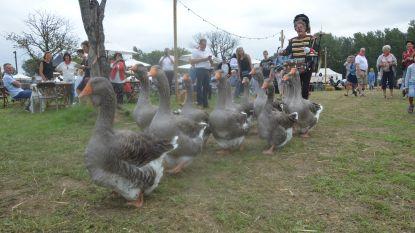 Oude ambachten en dieren zorgen voor boerenleute op Halfoogstfeesten