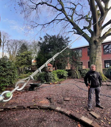 Behoud van waardevolle bomen is soms dure grap: Waalwijk schiet tuinbezitters te hulp
