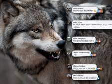 Juichen om doodgeschoten wolf op de Veluwe: waar komt deze haat vandaan?