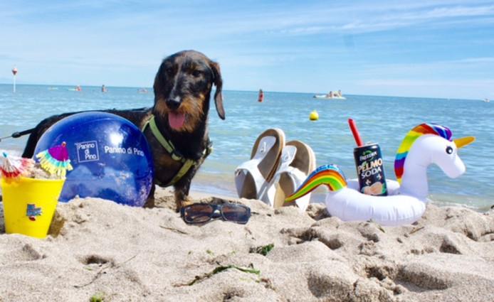 De hond van Bianca Mulders moest en zou meegaan op vakantie. En hij geniet ervan!