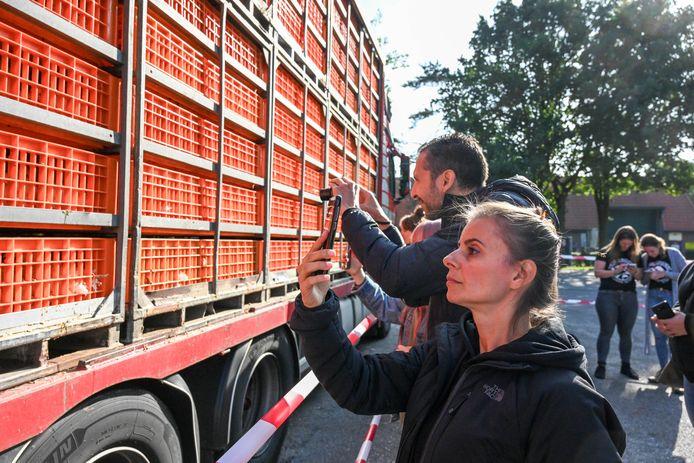 Het Australische paar maakt foto's van de dieren bij de slachterij in Nunspeet.