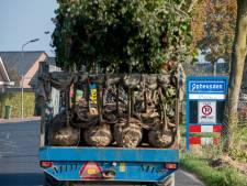 Ciara bezorgt laanboomkwekers rond Opheusden handenvol werk