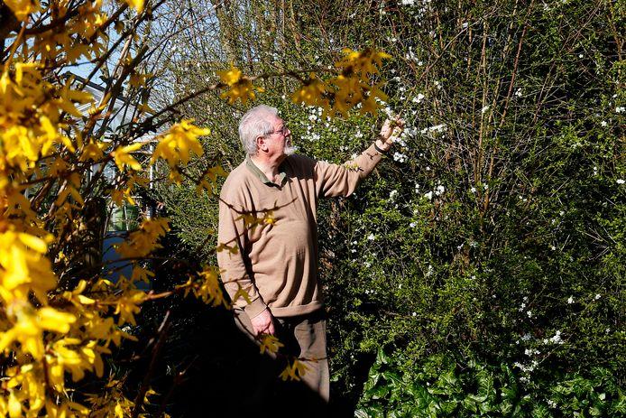 Entomoloog Cees Gielis wijst naar de bloeiende pruim in zijn verwilderde tuin.