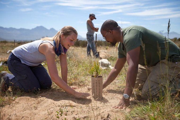 Aanplantingsproject in Zuid-Afrika. Beeld Trouw
