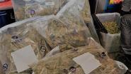 Cannabisplantage opgerold, twee verdachten vrij onder voorwaarden