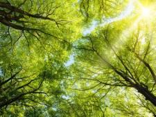 Brabant plant 40 miljoen bomen