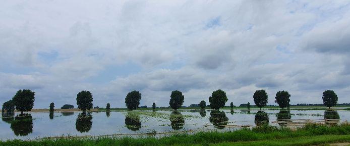 Een aardappelveld in de uiterwaarden van de Bergsche Maas is ondergelopen.
