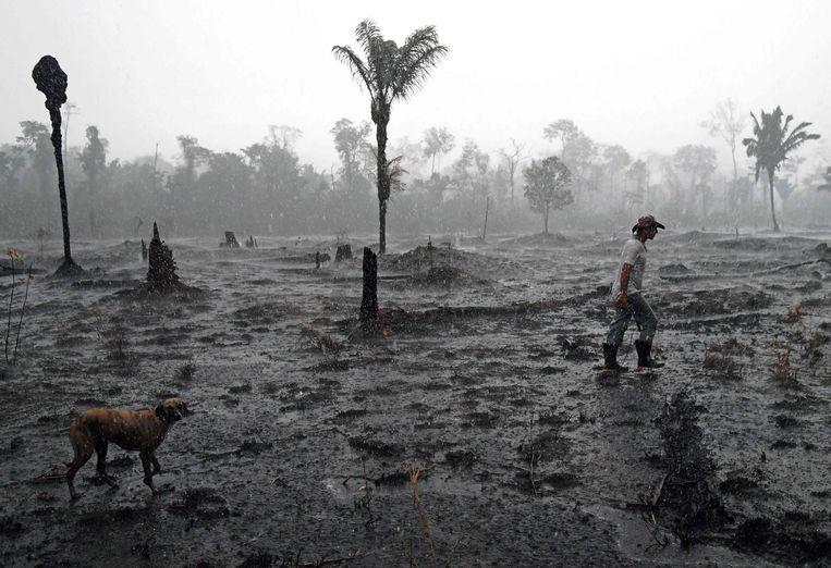 26 augustus 2019. De Braziliaanse landbouwer Helio Lombardo Do Santos op een stuk afgebrand regenwoud in de Amazone. Beeld AFP