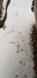 Denley is met de poes op pad. Samen op ontdekkingsreis in de sneeuw.