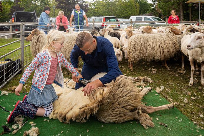 Kinderen mochten een handje helpen met het scheren van de schapen.