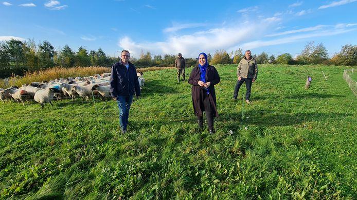 Wethouder Nadya Aboyaakoub hoedt de schapen in Corlaer.