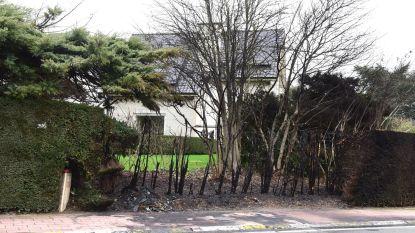 Haag vernield door brandende wagen