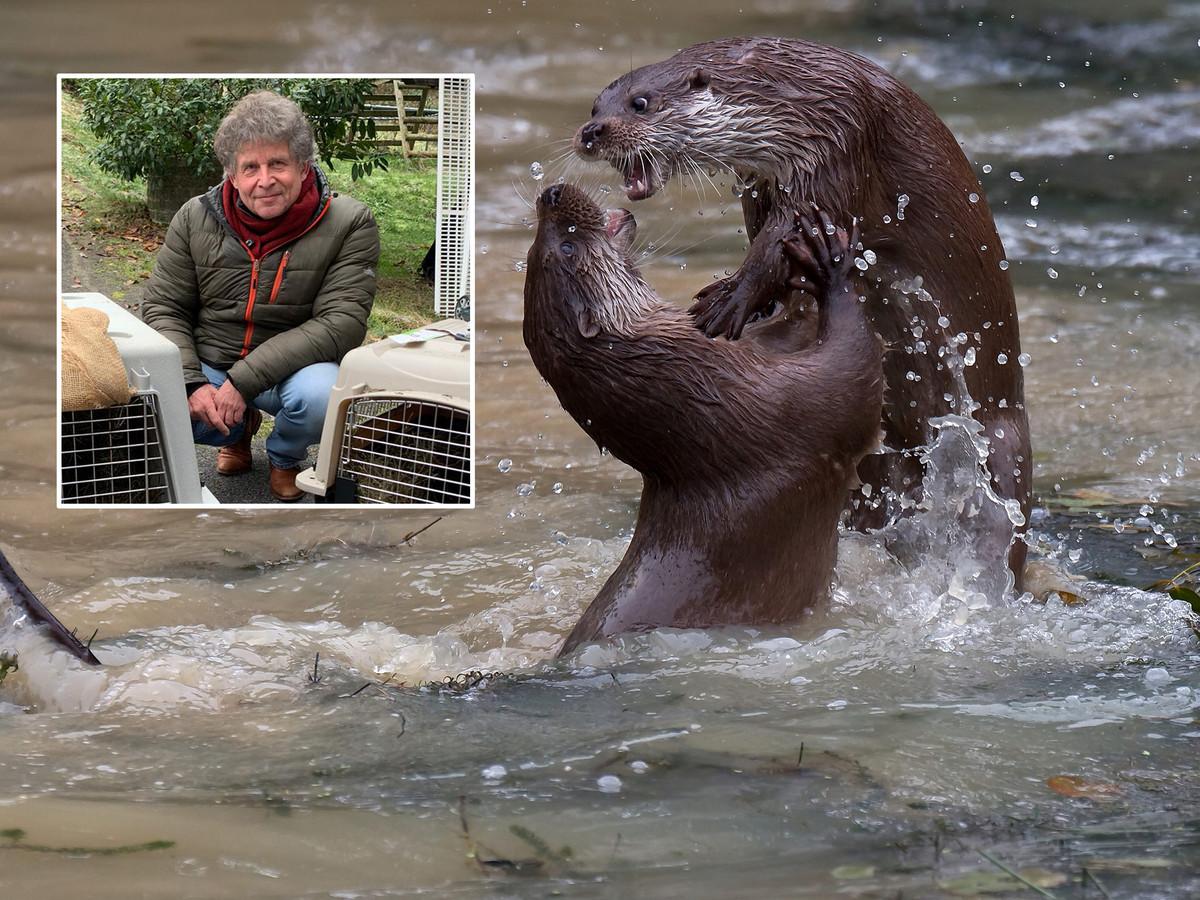 Spelende otters uit de Nederlandse otterfilm De otter, een legende keert terug van Hilco Jansma. In het kader otterdeskundige Addy de Jongh.