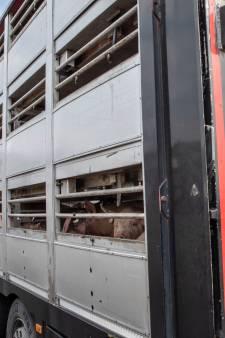 Nieuwe afspraken maken nachtelijk slachten mogelijk bij Van Rooi Meat in Helmond