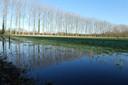 Een weiland in Liempde staat onder water.