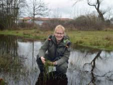 Ecologische ramp dreigt: woekerplant neemt plassen over. Oeverkruid mogelijke oplossing