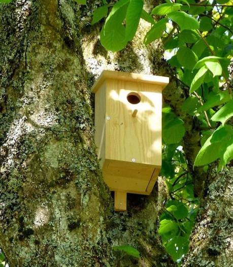 Run op gratis nestkastjes in Ermelo, voor bestrijding jeukrups