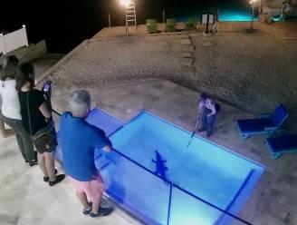 """Ongewenste gast sluipt in zwembad van Amerikaans gezin: """"Niet de eerste keer"""""""