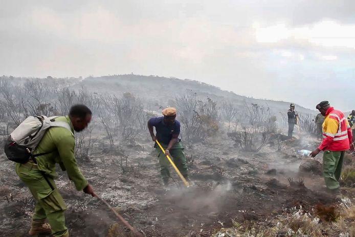 Circa 500 vrijwilligers proberen het vuur te doven.