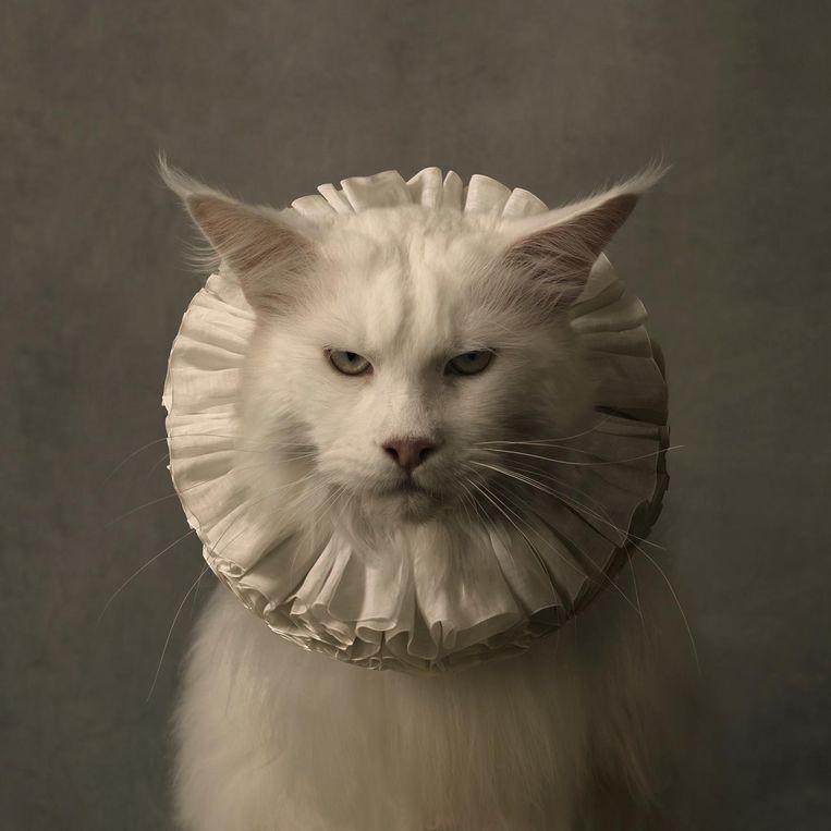 Een van de objecten op de beurs: Cat With White Collar VII Beeld Marie-Cécile Thijs