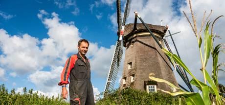 Oer-Hollandse plaatje mogelijk ten onder: 'Koe verdwijnt uit de wei door hoger waterpeil