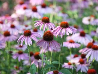 Ardooie zoekt mooiste tuinen
