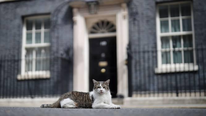 Kat Larry viert 10-jarig jubileum als officiële muizenjager van Downing Street 10