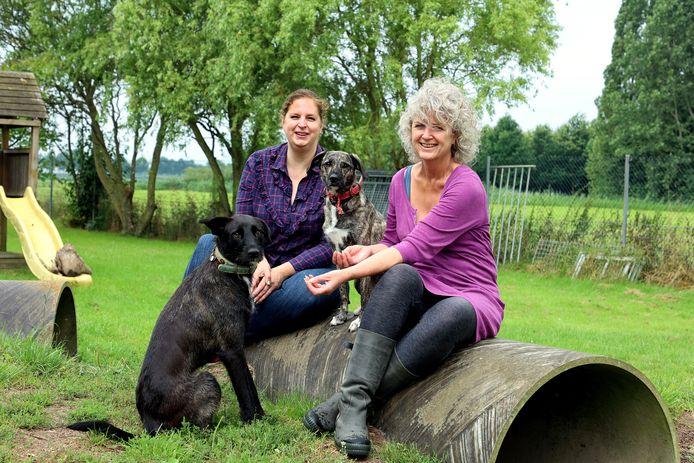 Irene Augusteijn (links) heeft het voorzitterschap van Dierenopvangtehuis De Bommelerwaard overgedragen aan Marleen van Baal.