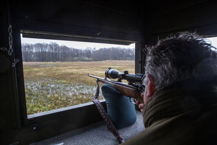 Soerendonk - Jager Ploos van Amstel in gebied de Goorloop waar veel zwijnen zijn (korrel gericht op voerplaats)