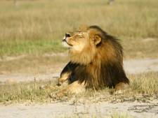 Un autre chasseur américain suspecté d'avoir braconné un lion au Zimbabwe