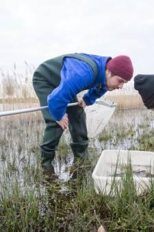 Met schepnetten op zoek naar beestjes aan de waterkant