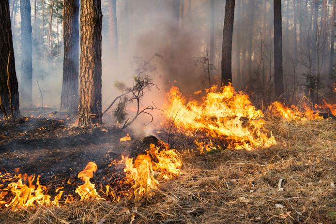 Door de droogte en de warmte is het risico op natuurbrand groot.
