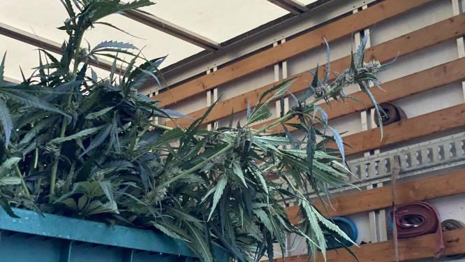 Zware brand in voormalige feestzaal legt cannabisplantage bloot, maar dat houdt negental niet tegen het nog eens te proberen
