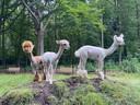De drie alpaca's