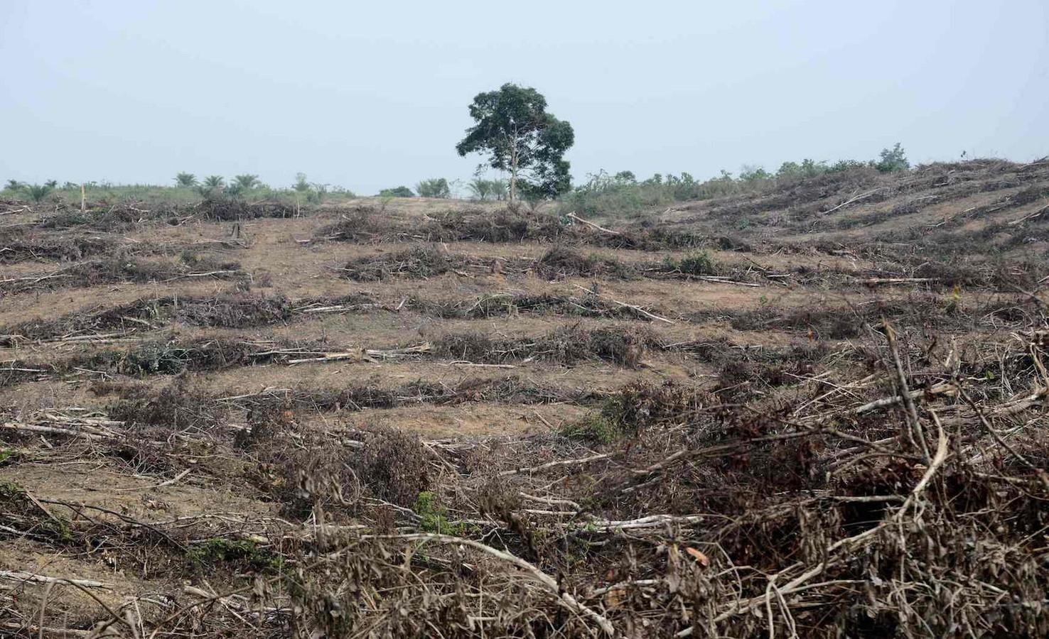 Een stuk grond op Sumatra, platgebrand om palmoliebomen te planten.