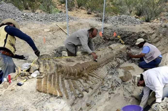 Sa queue a été découverte en 2013 dans la municipalité de General Cepeda, dans l'Etat de Coahuila.