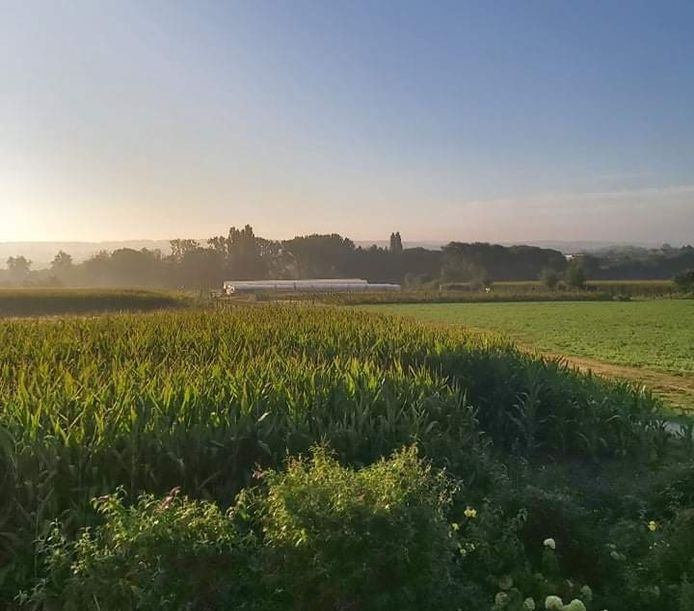 De zonsopgang in het Vlaams-Brabantse Lembeek (Halle).