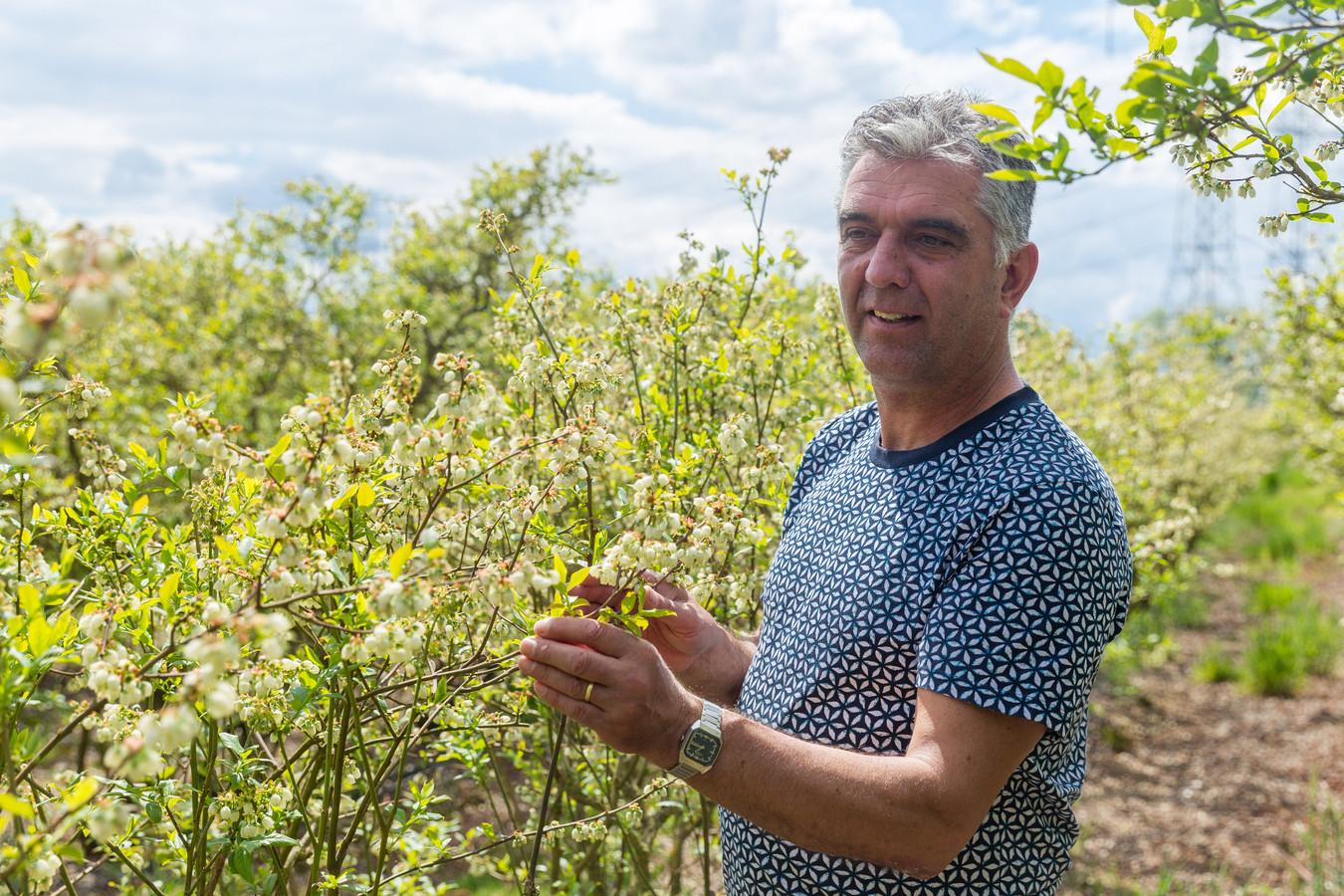 Christian van Grotel houdt het in Nuenen bij blauwe bessen.