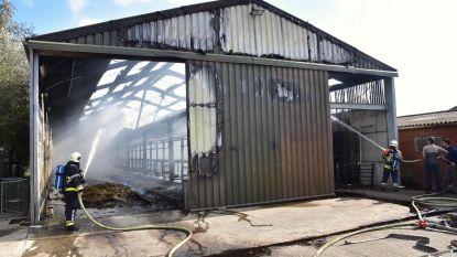 Koeienstal gaat volledig in vlammen op, twee kalfjes gered