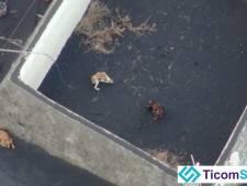 Les chiens piégés par la lave à La Palma sont sains et saufs: la preuve en images