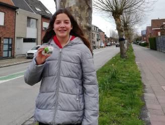 """Curieus Niel voert actie voor behoud van platanen in Matenstraat: """"Maak een hart van je steen"""""""