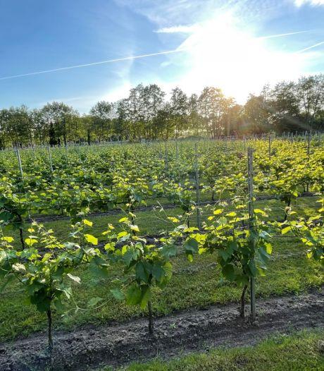 Wijnliefhebbers opgelet: er is een proeftoer langs drie wijngaarden in Nijkerk en Hoevelaken