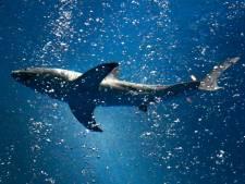 Haai maakt dodelijk slachtoffer in AustraIië