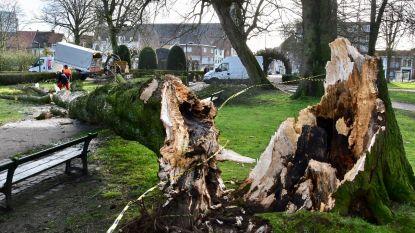 Eeuwenoude boom sneuvelt door storm in Kortrijks Astridpark