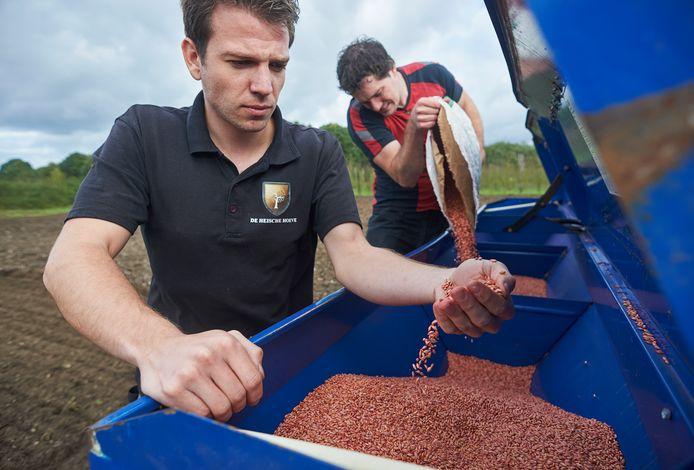 Rob Ulijn beoordeelt de kwaliteit van het gerstzaad voor de whiskey, terwijl Rick van der Heijden de zaaier bijvult.